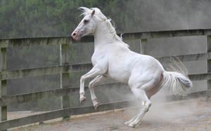 White stallion rear 1 by xxMysteryStockxx