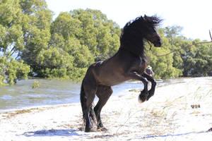 Freisian Stallion rear stock  2 by xxMysteryStockxx