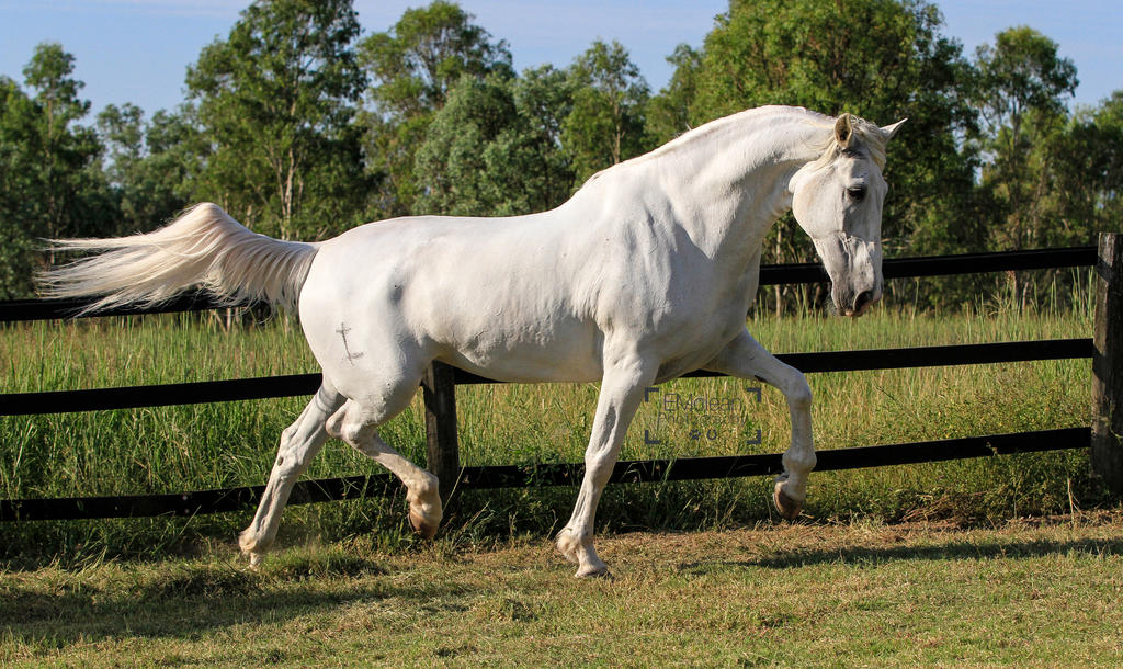 Andalusian Stock by xxMysteryStockxx