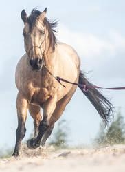 Bucksking Horse