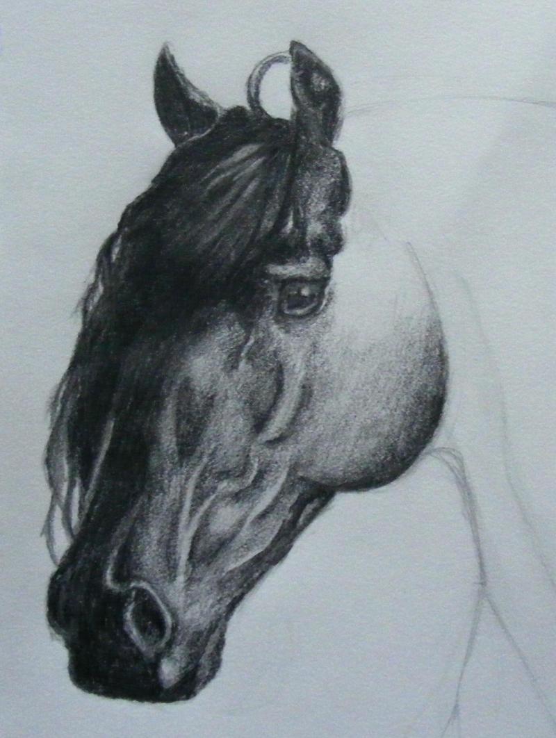 Friesian Head Drawing Friesian Head Wip by