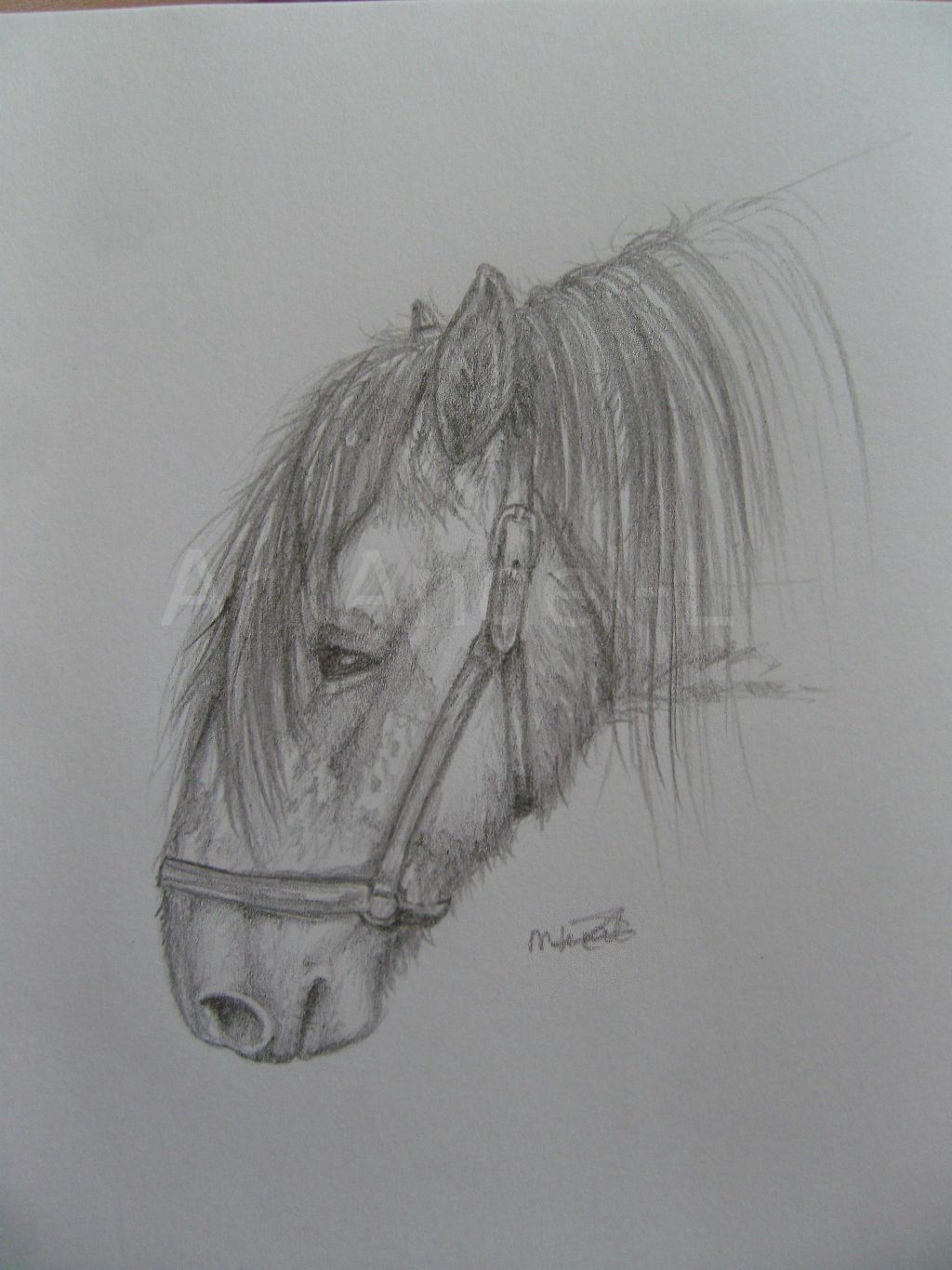 Draft horse headshot