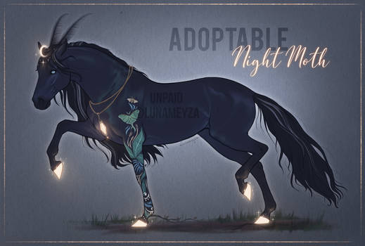 Adoptable - Night Moth - SOLD