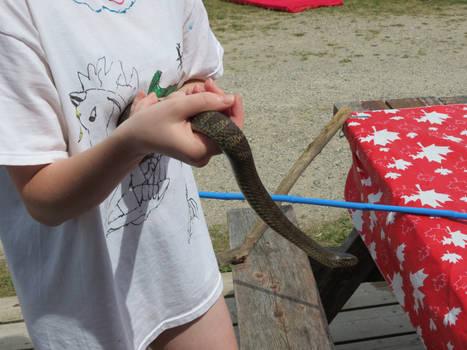 Eastern Water Snake