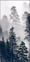 Divider (Mist|2)