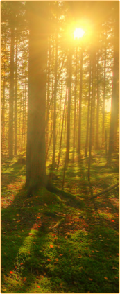 Divider (Forest) by CatSpy69