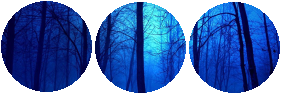 Divider (Dark Night In The Forest) by CatSpy69