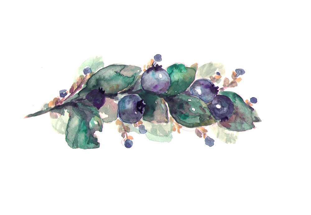 Blueberries watercolor by RianaG