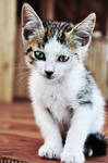 pretty little cat.