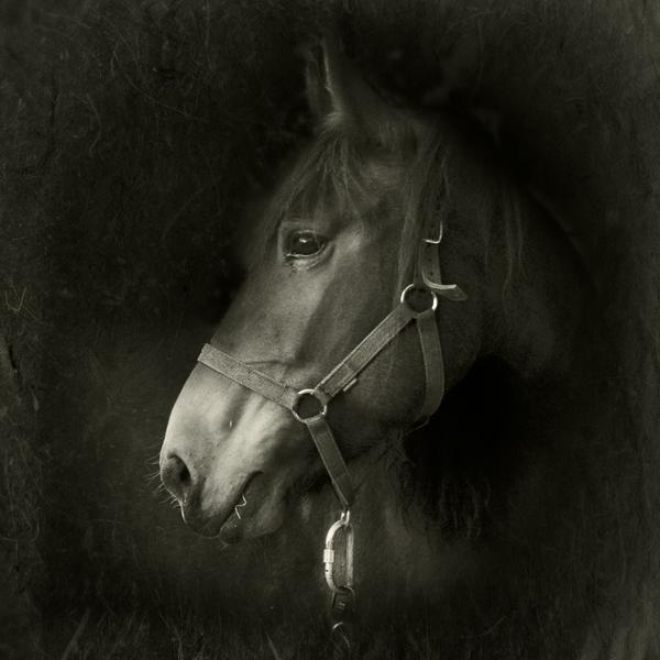 a portrait... by Kaarmen