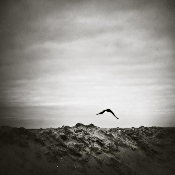 fly,fly away...