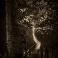 magic dust... by Kaarmen