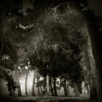 fog is coming... by Kaarmen