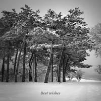 Best wishes.... by Kaarmen