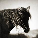 Wild beauty 2 by Kaarmen