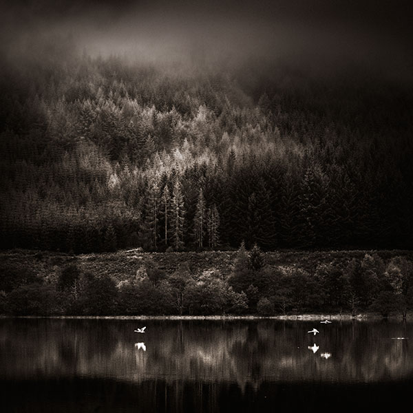 Silent-flight by Kaarmen