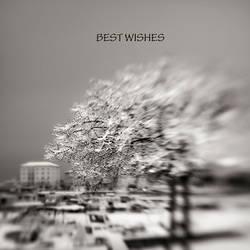 Best-wishes-2015.