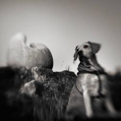 Obi-in-Montraker by Kaarmen