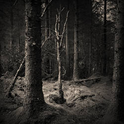 Ballade from a wood by Kaarmen