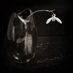 Primavera by Kaarmen