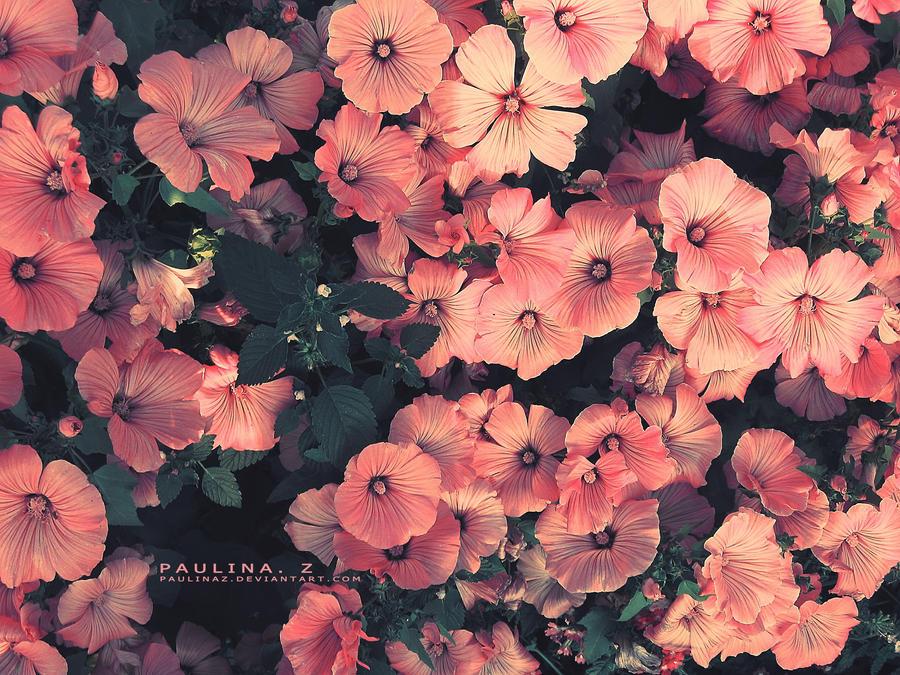 Le Miel retente sa chance. :B Flowers__by_paulinaz-d39tis4