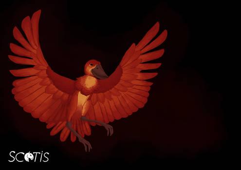 Le phoenix bec-en-sabot du nil