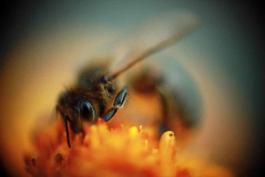 Wasp by paulisa