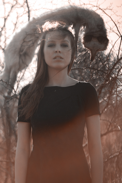 Wilderness by paulisa