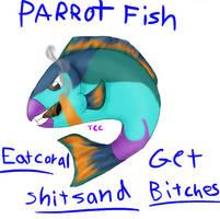 The Parrot Fish's Modo