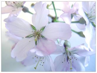 flowers 1 by halloweenhavok