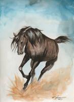 Horse by rchaem