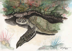 Turtle by rchaem