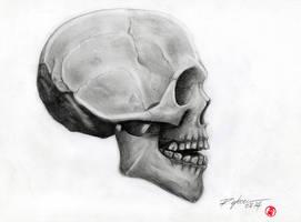 human skull by rchaem