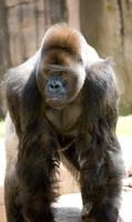 more zoo 3