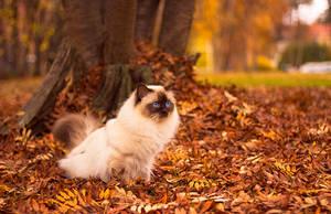 Autumn Boy by Viljakettu