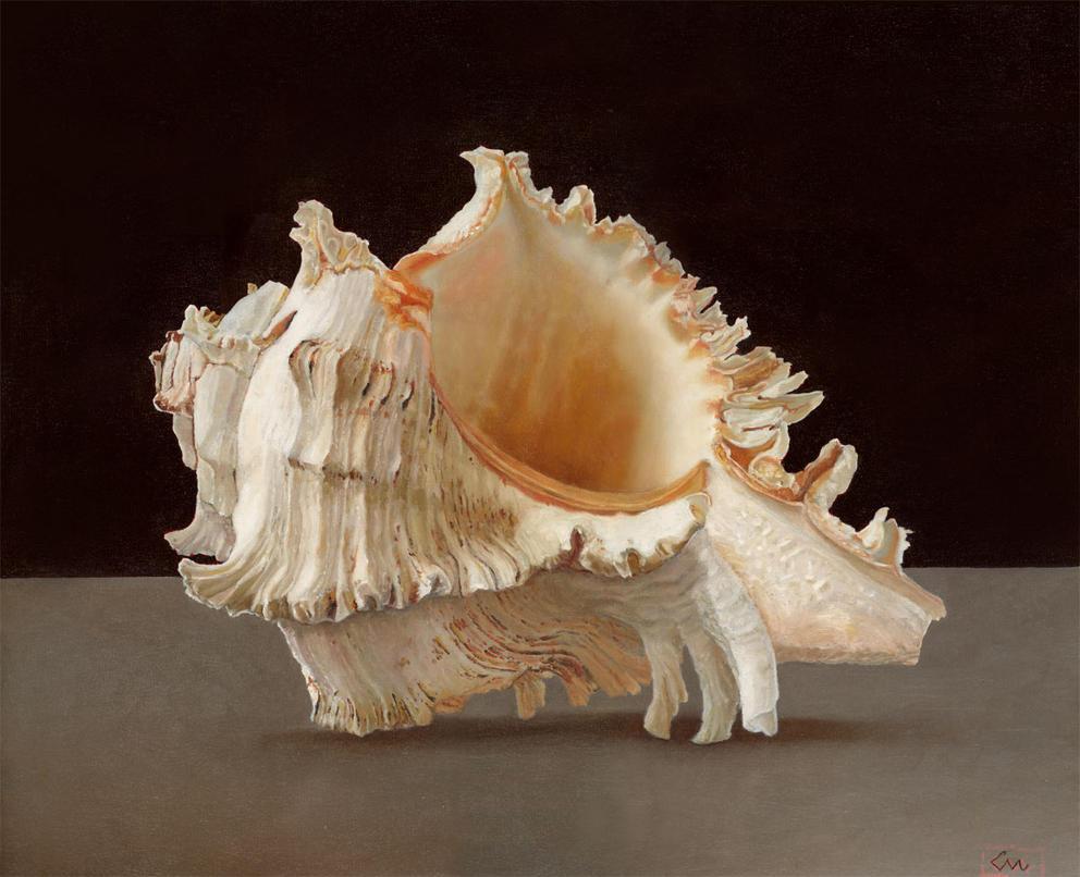 Sea Shell by carlosmonteiro