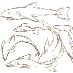 Shark Doodles