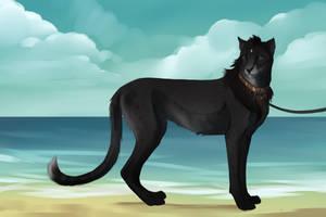 Sekhmet: Korung by Foxgrove-Stables