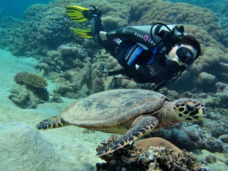 Le plongeur et la tortue by scubapic