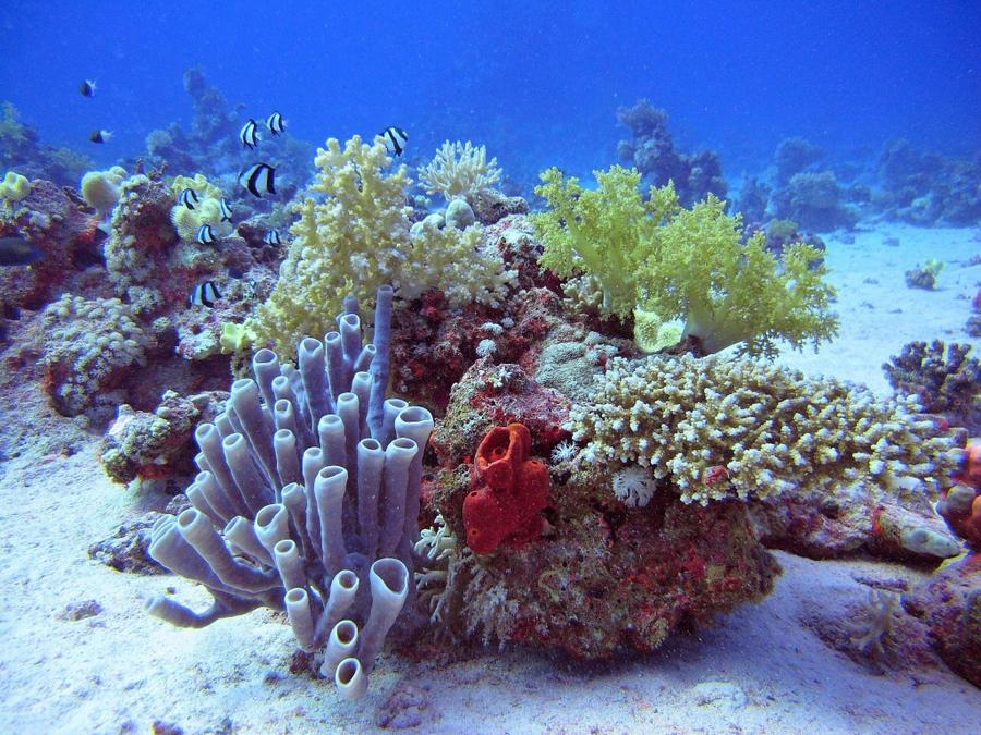 Jardin de coraux by scubapic