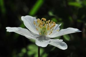 Bouquet d'etamines