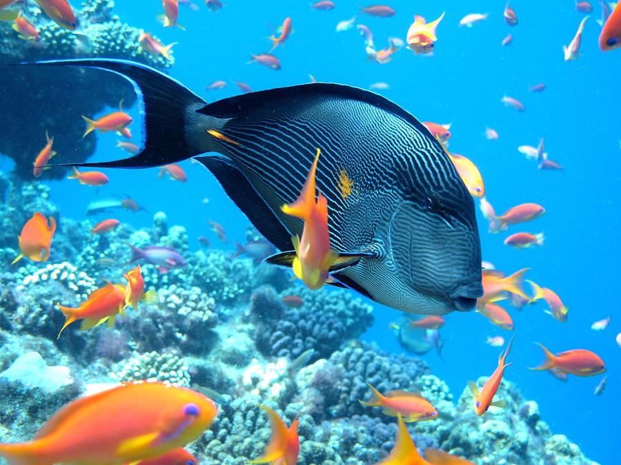 Chir en mer by scubapic