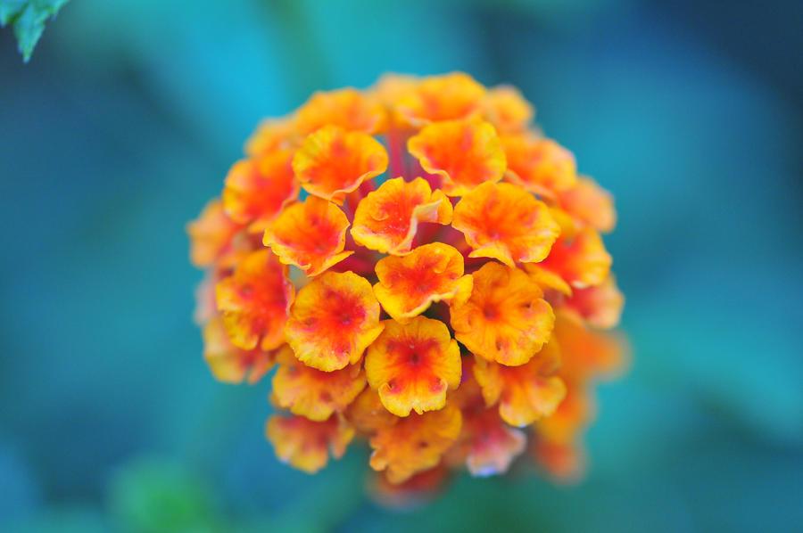 Grappe a fleur by scubapic