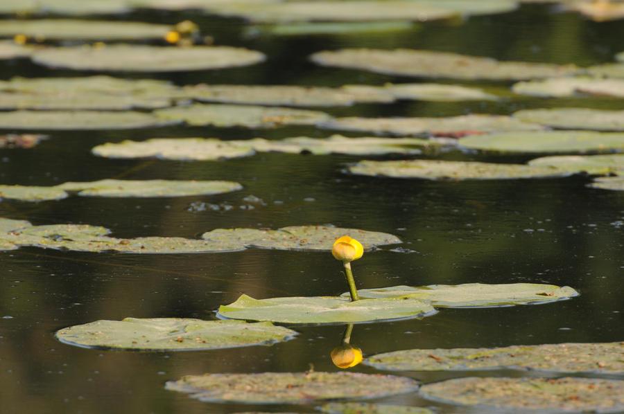 fleur d'O by scubapic