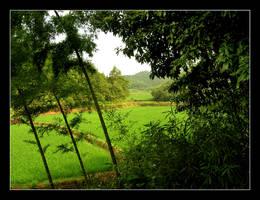 bamboo rice by zumbooruk