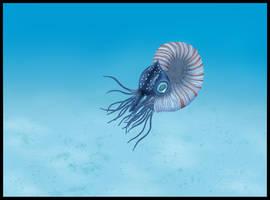 Nautilus by zumbooruk