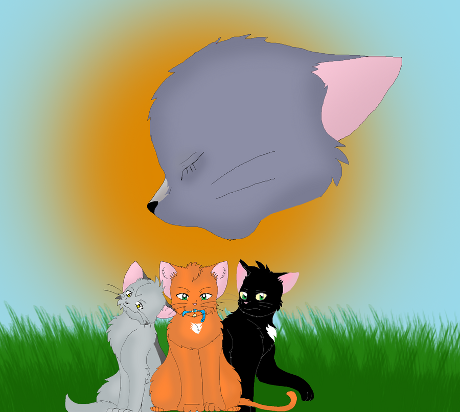 Into The Wild Graypaw Warriors: Warriors Into The Wild By Thegreatgreywolf On DeviantArt