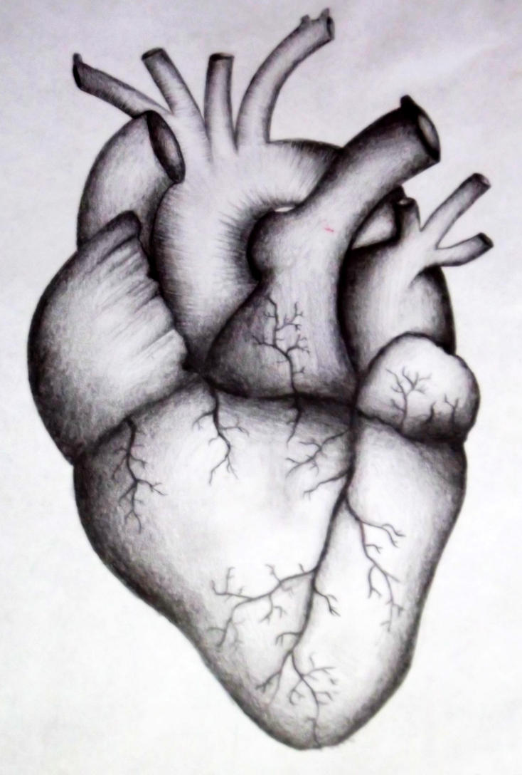 human heart by kortney16 on deviantart, Muscles