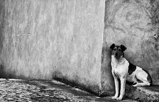 Doggie by MsCarmen