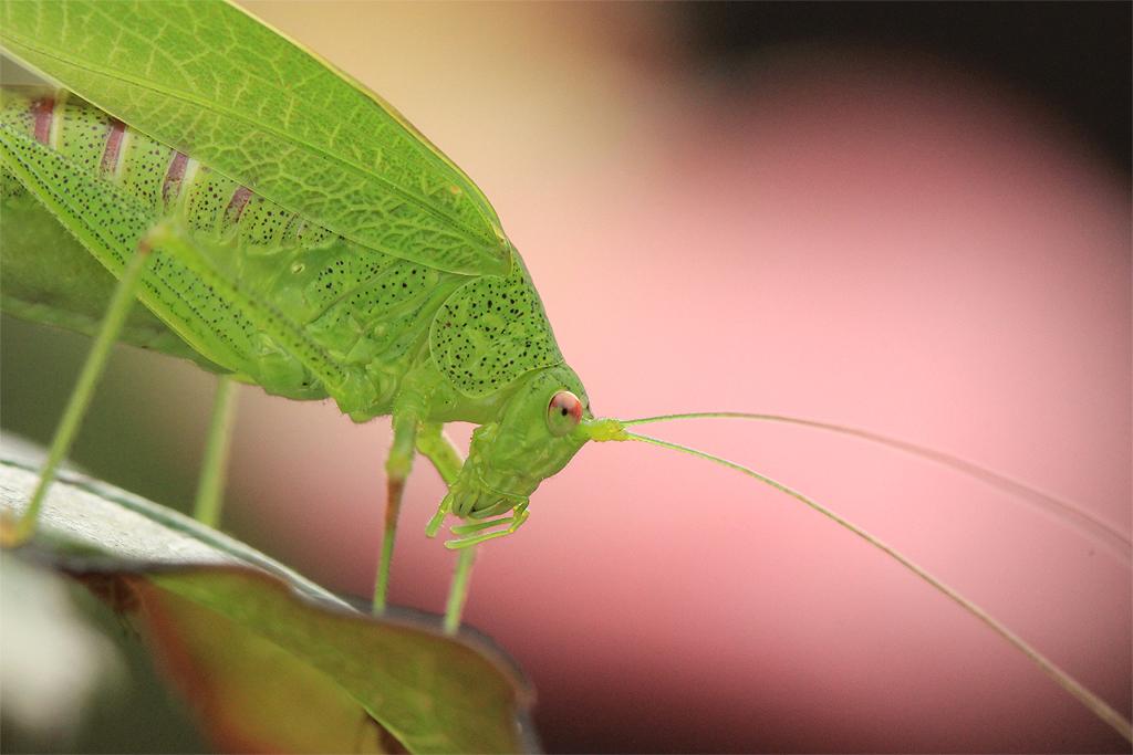 Grasshopper by evilke